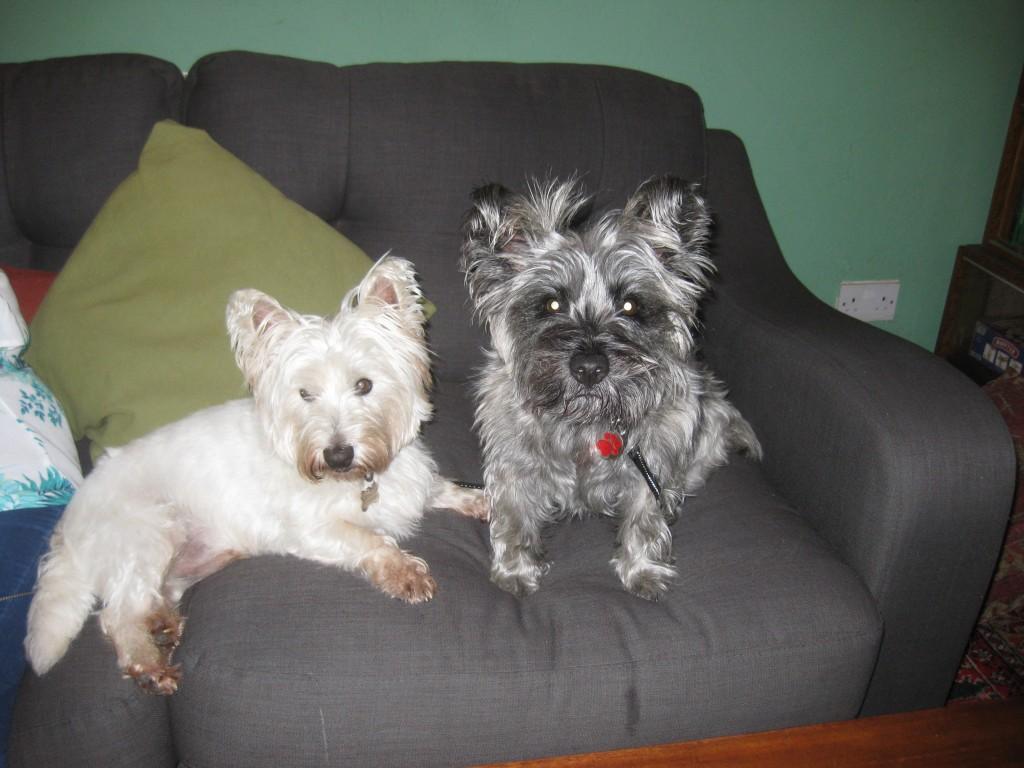 Dog Friendly Bed And Breakfast Combe Martin North Devon