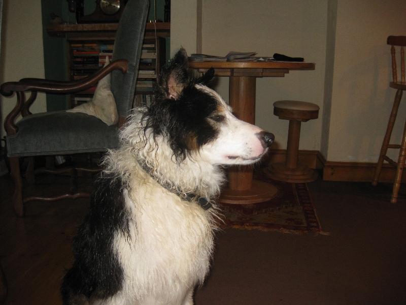 Dog Friendly B B Exmoor